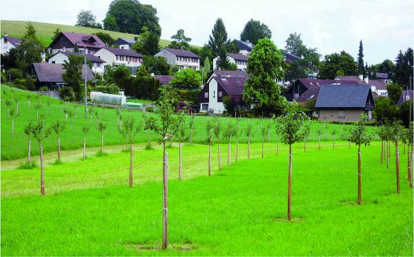 © C. Erismann, Abteilung Landwirtschaft. Foto aus der Gemeinde Gossau / Hochstamm-Obstgärten befinden sich vorzugsweise am Siedlungsrand. Pro Betrieb und Jahr können bis zu 100 Bäume gesetzt und mit LQ-Beiträgen finanziert werden.