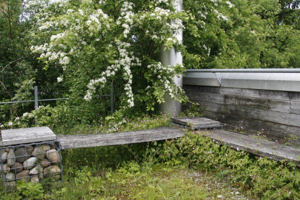 Ein Weissdorn im Gartensitzplatz.
