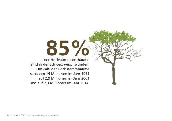85 Prozent der Hochstammobstbäume sind in der Schweiz verschwunden.