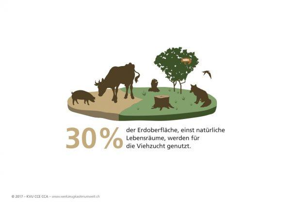 30 Prozent der Erdoberfläche wird für Viehzucht benutzt.