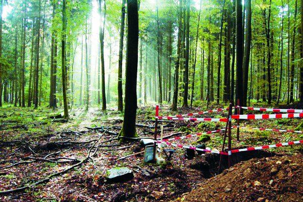 Ort eines Bodenprofils im Wald.