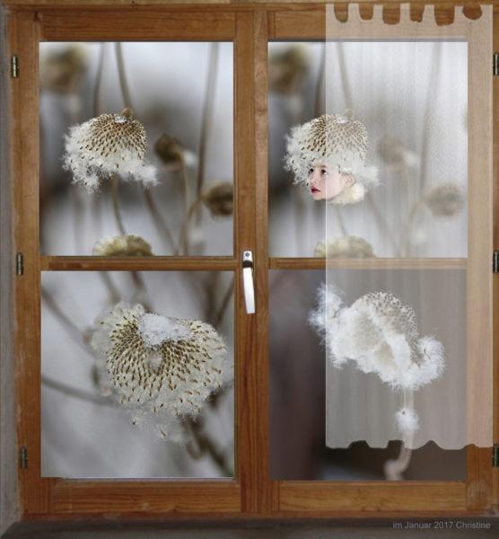 Fenster in den Garten zeigt Blumen.