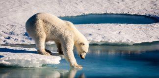 Eisbär steht auf einer Eisfläche, die von Wasser umgeben ist.