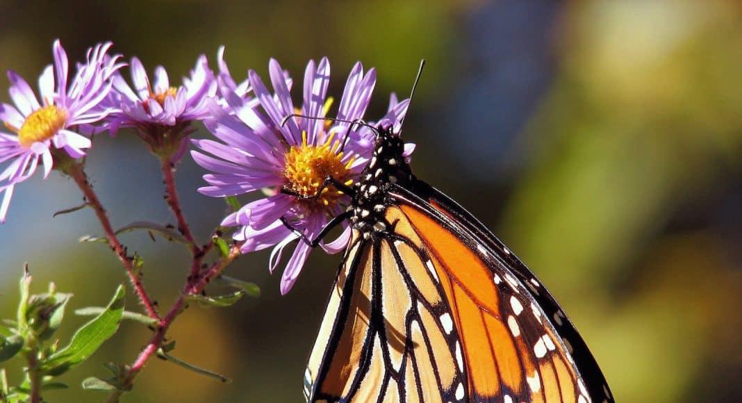 Schmetterling auf Blume.