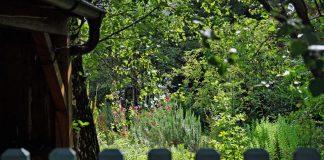 Blick in einen naturnahen Garten voll von Pflanzen, Farben und Tieren.