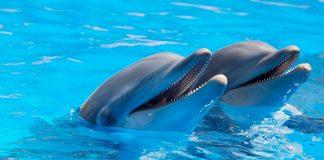 Delphine und Wale dürfen nicht in die Schweiz importiert werden.