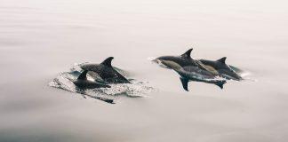 Tierschutzorganisationen wollen nicht, dass Meeressäuger importiert werden können.