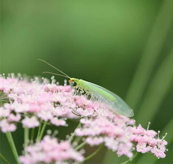 Ein Insekt auf einer Blüte.