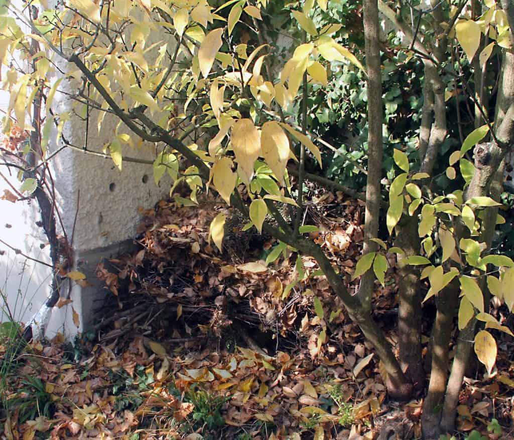 Ein Igelhaufen voll von Blätter im Garten.