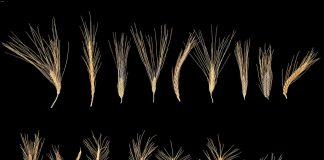 In einer Genbank sollen das Saatgut gesammelt werden.