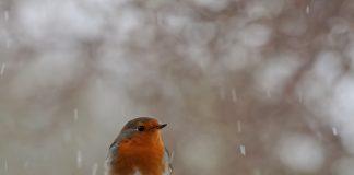 Vogel sitzt im Winter im Schnee