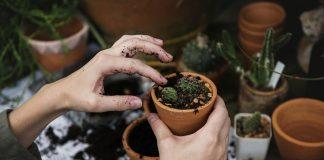 Eigene umweltprojekte machen, zum Beispiel etwas anpflanzen.