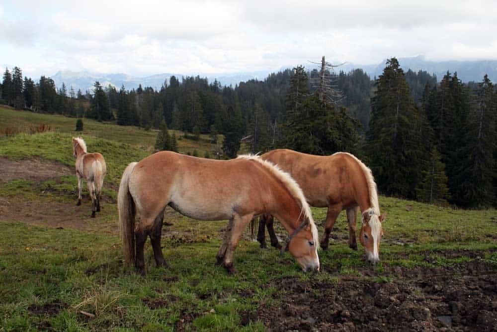 Wandertipp Moorlandschaft in der Ibergeregg.