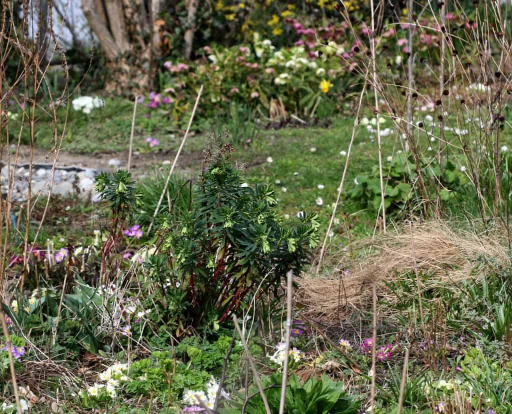 Blick in den naturnahen Garten.