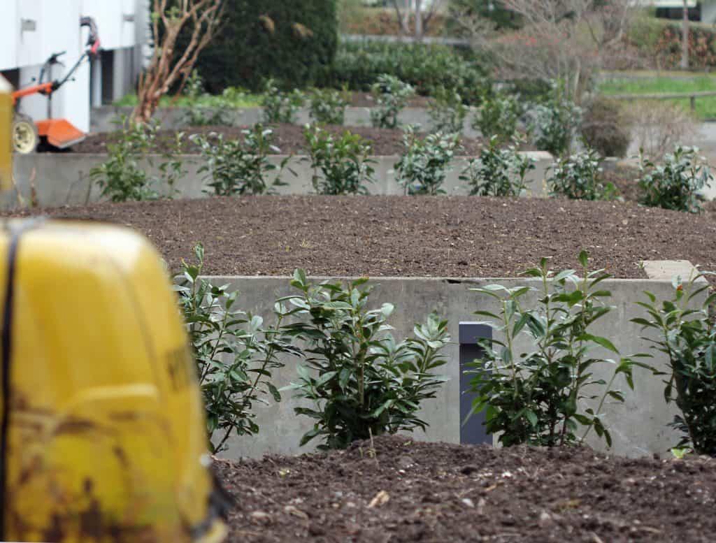 Neuanpflanzung im Garten.
