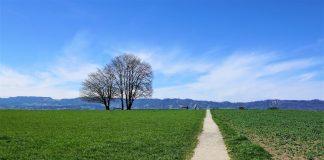 Landschaft in Zollikon.