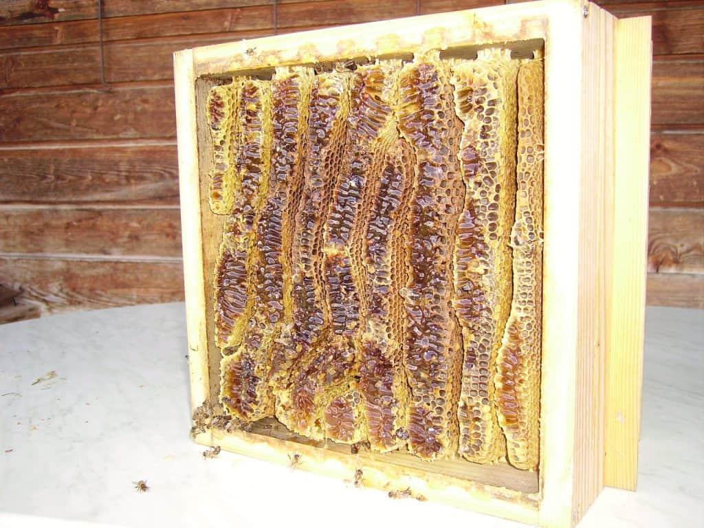 So sieht eine natürliche Bienenwabe aus.