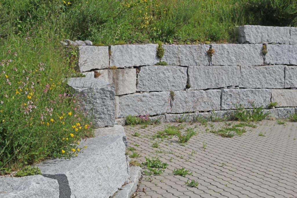 Naturnaher Garten mit Steinmauer.