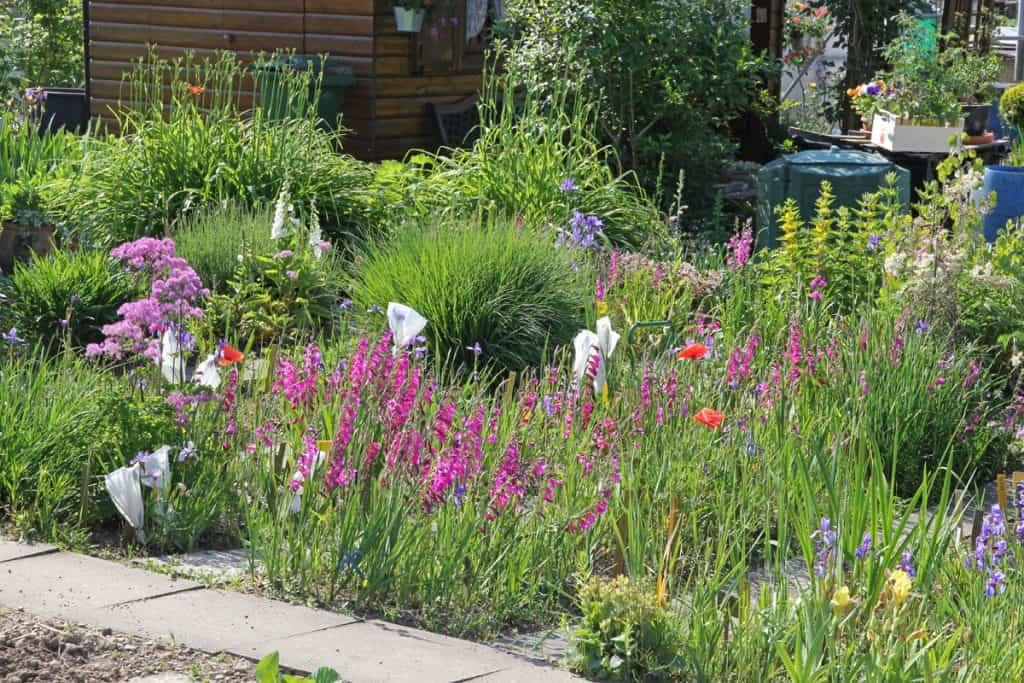 Naturnaher Garten mit seltenen Pflanzen.
