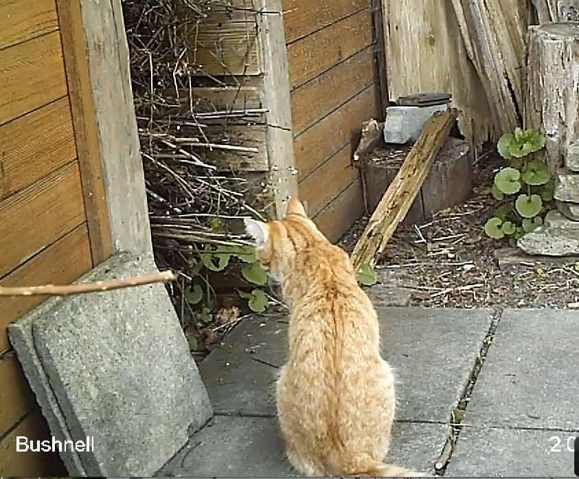 Auch tagsüber ist die Katze im Garten auf der Lauer.