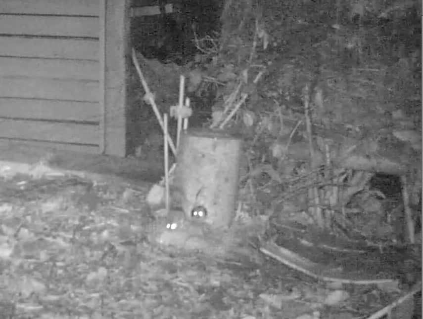 Mäuse im nächtlichen Garten.