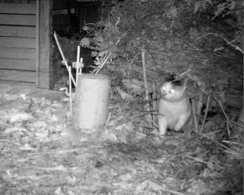 Eine Katze im nächtlichen Garten.