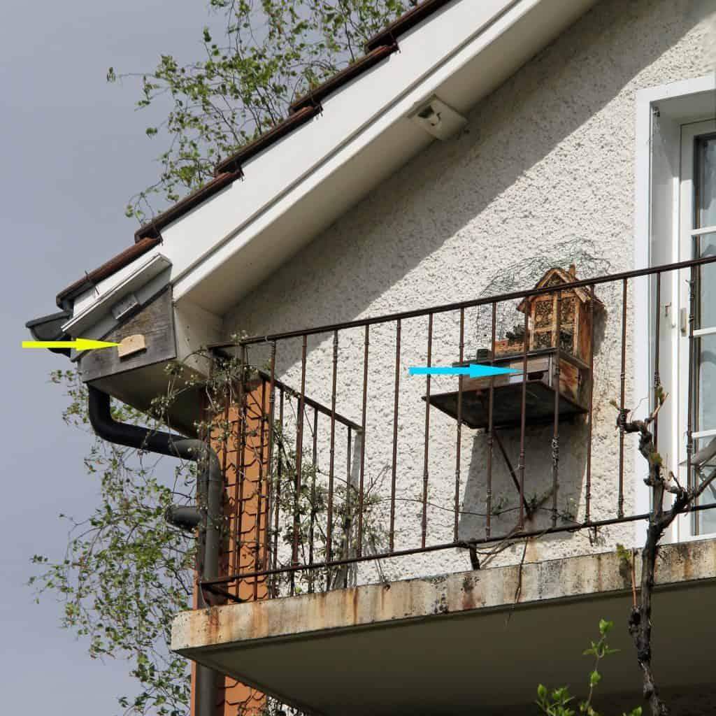 Nest für Meisen und Mauersegler.