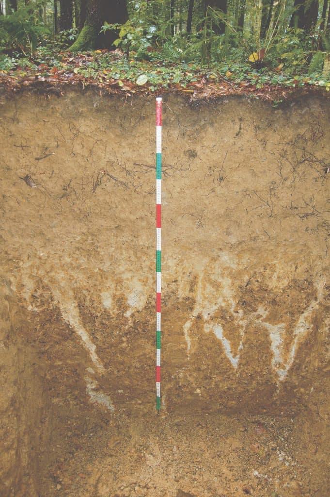 Ein Bodenprofil im Irchel.