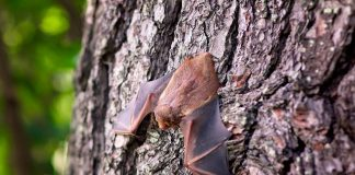 Fledermaus an einem Baum.