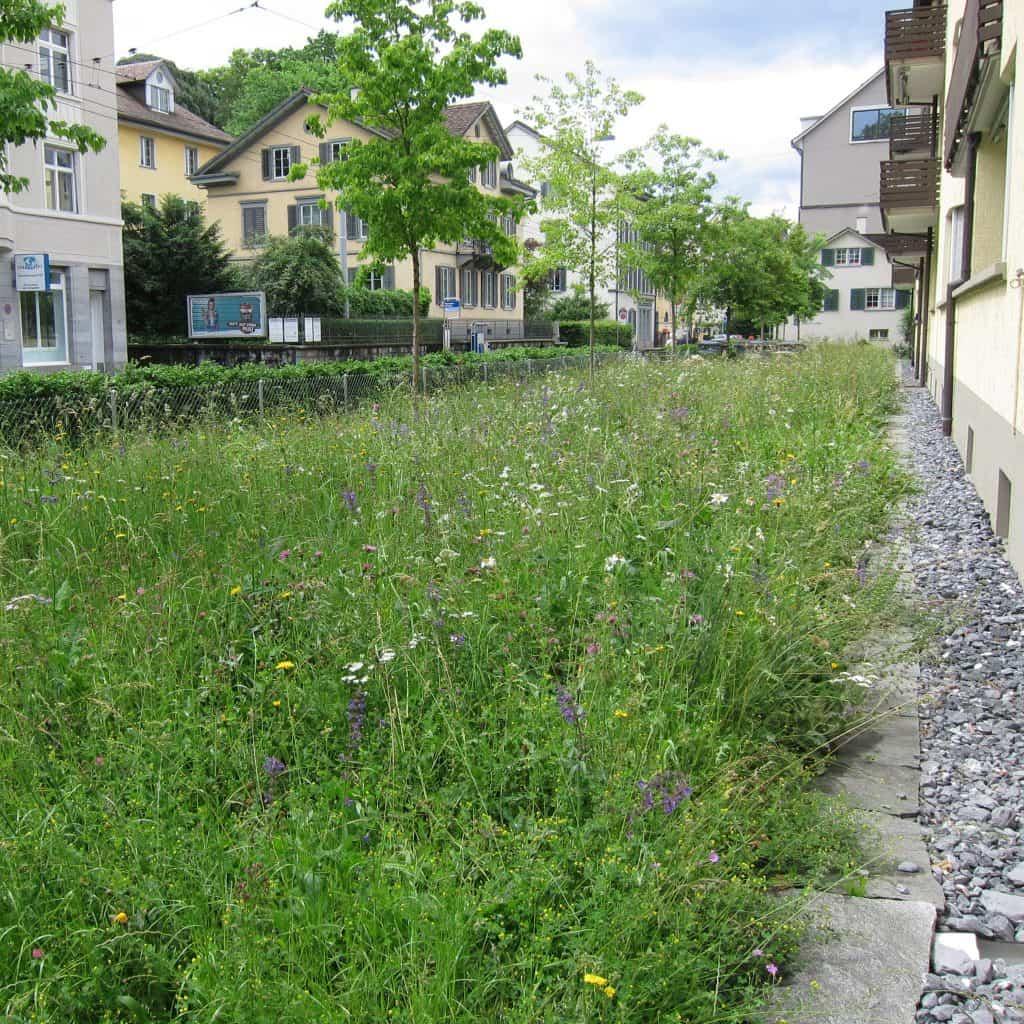 Wildblumenwiese mitten in der Stadt.