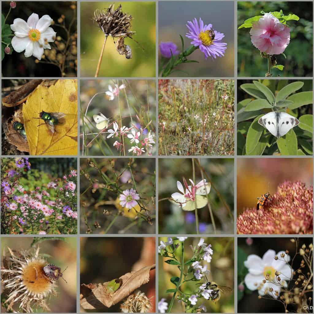 Viele Insekten und Pflanzen während eines Spazierganges.