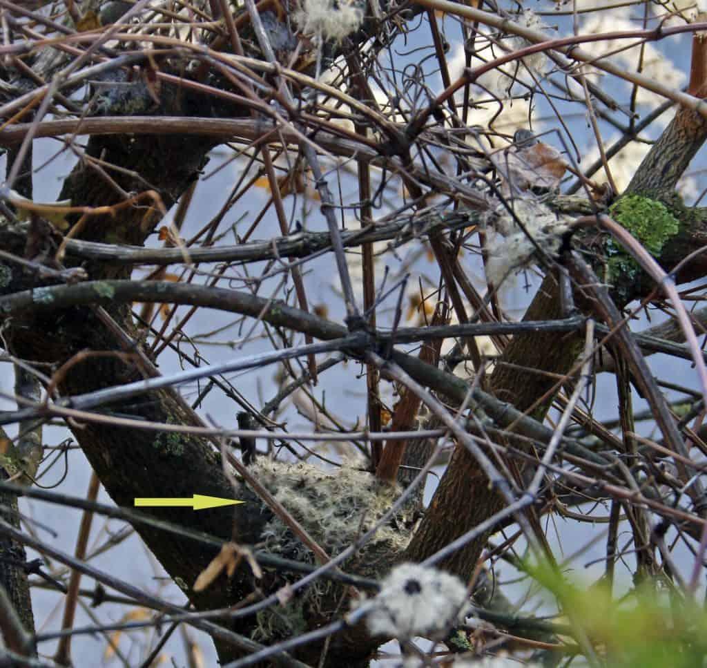 Ein Nest in einem Baum.
