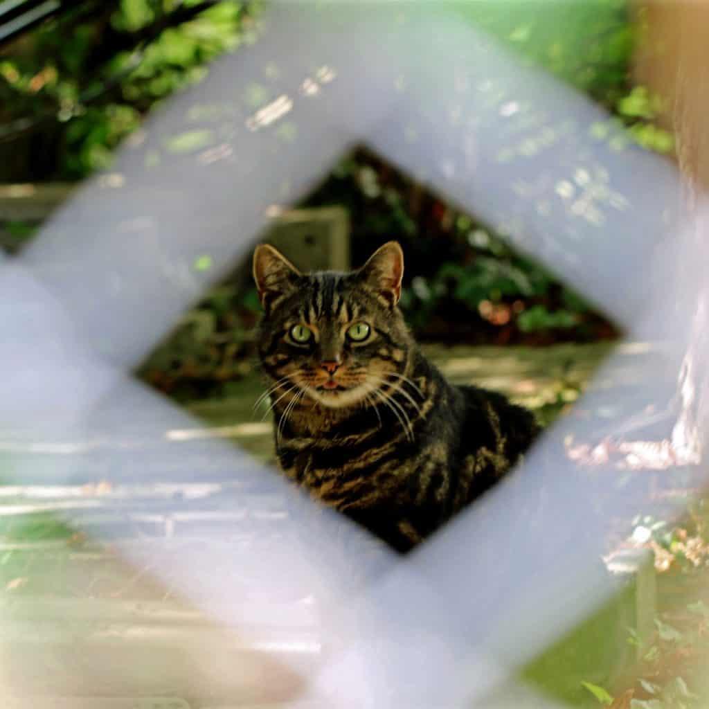 Katze hinter einem Zaun.