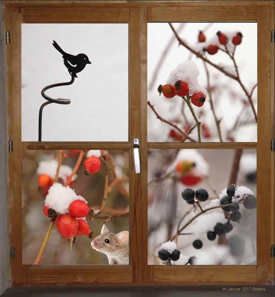 Fenster in den Garten zeigt Beeren im Winter und Maus.