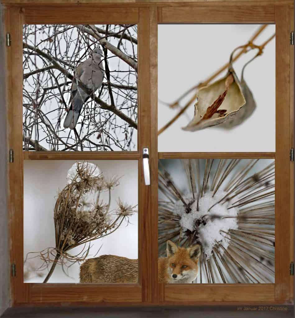 Fenster in den Garten zeigt Tiere wie Taube und Fuchs.