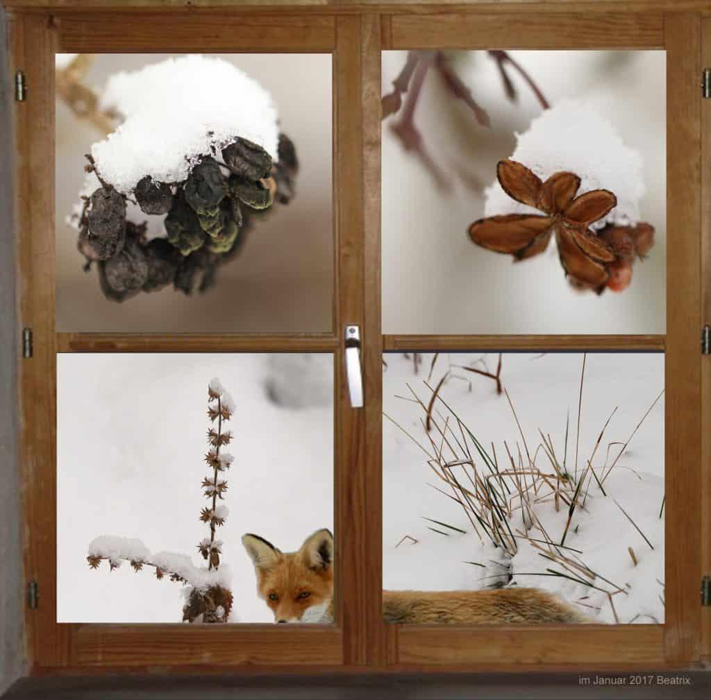 Fenster in den Garten zeigt Fuchs und Zapfen mit Schnee.