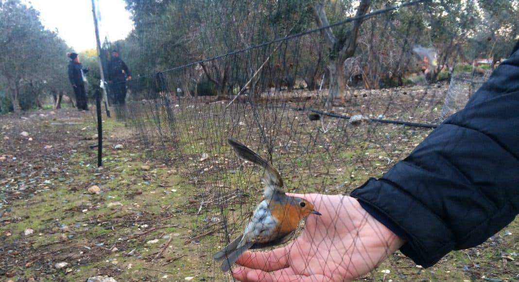 Wilderei von Zugvögeln in Zypern.