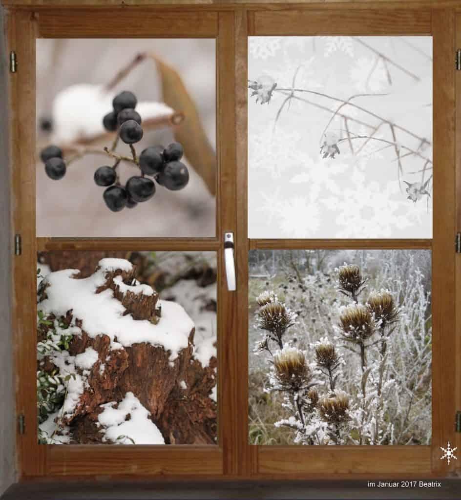 Verschneite Bilder aus dem Garten