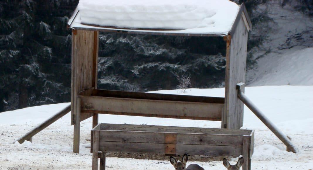 Im Winter finden sich die Wildtiere an der Futterkrippe zusammen.