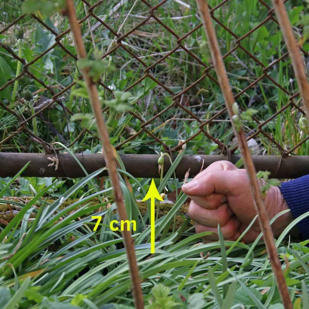 Der Abstand unter dem Zaun ist für ein Igel zu klein.