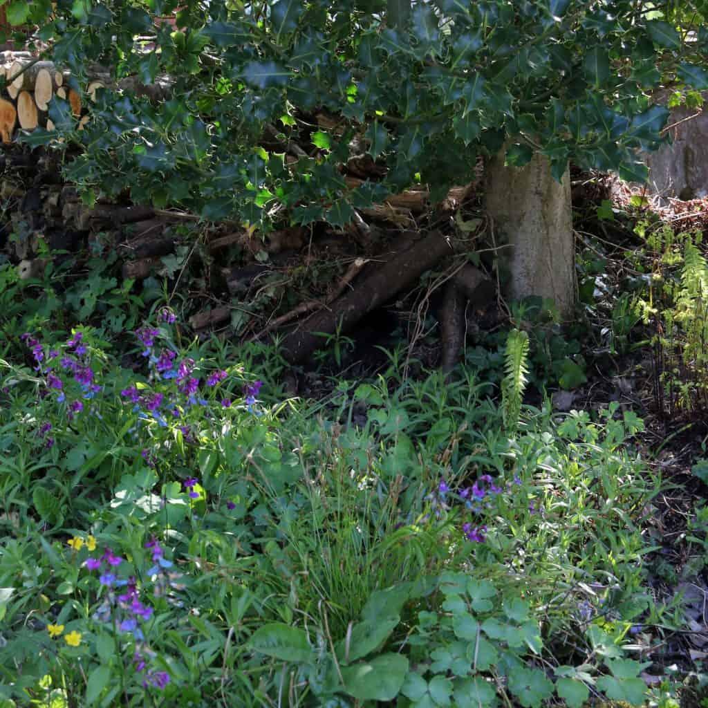 Damit sich der Igel am Tag verstecken kann, braucht es dichtes Gebüsch.