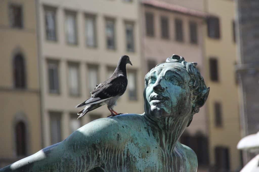 Eine junge Taube sitzt auf einer Statue.