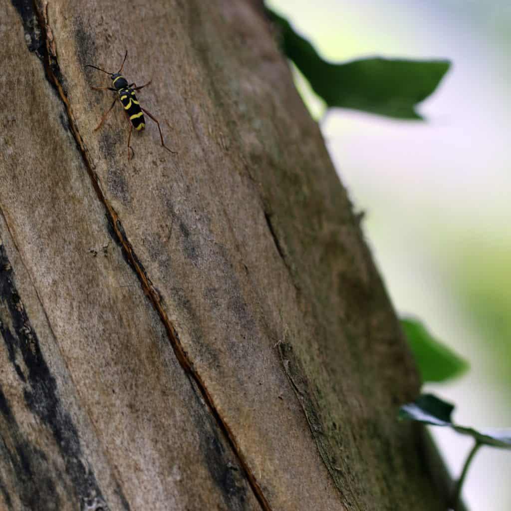Ein Widderbock auf Totholz.