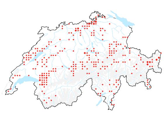 Verbreitung des Grossblütigen Fingerhuts.