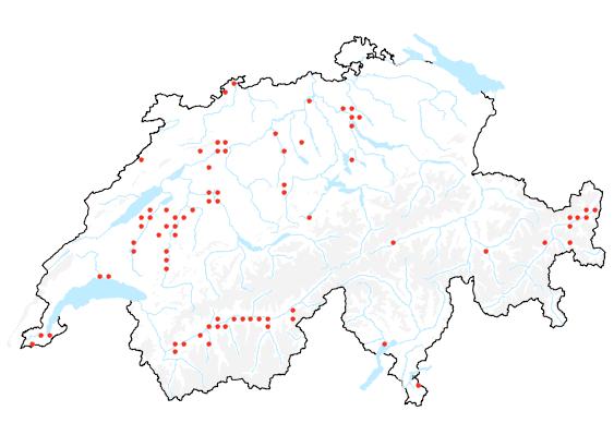 Die giftige Seite der Schweizer Flora 2