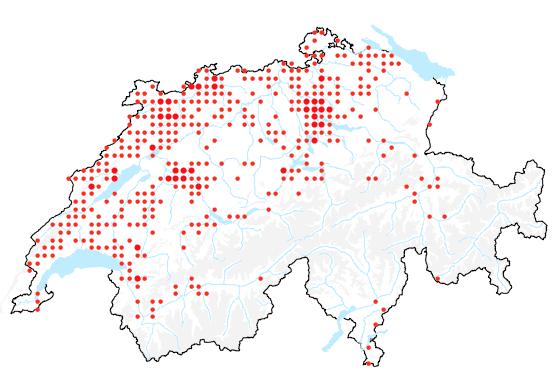 Verbreitung der Tollkirsche in der Schweiz.