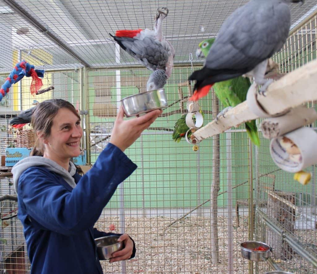 Tierpflegerin füttert Papageien in der Voliere.