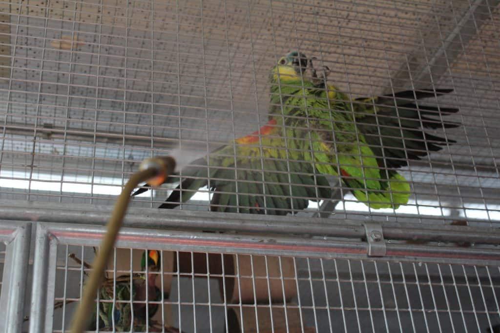 Die Papageien in der Voliere kriegen eine Dusche.
