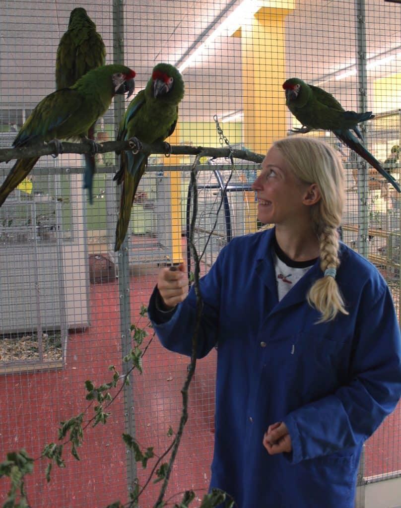 Papageien, hier Soldatenaras, kriegen Nüsse zum fressen.