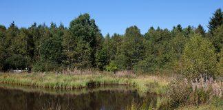 Moore, wie dieses Hochmoor, kommen immer mehr unter Druck und ihre Ökosysteme sind bedroht.